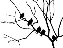 Silhouette starling. On branch tree Stock Photo