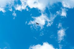 Silhouette Steppe eagle flying under the bright sun and cloudy sky in spring stock photography