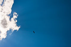 Silhouette of stork is flying against the blue sky Royalty Free Stock Image