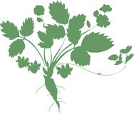Silhouette of Strawberry plant Stock Images