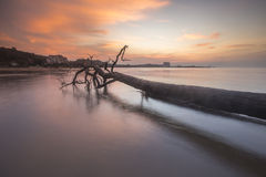 Silhouette of Stumps and roots of dead mangrove trees at the beach during sunset. Soft Focus, Motion blur due to long exposure sho. Sunset taken in Port Dickson Stock Photo