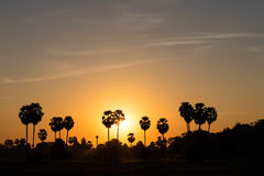 Silhouette sugar palm sunrise. Royalty Free Stock Images