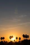 Silhouette sugar palm sunrise. Royalty Free Stock Photography