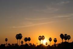 Silhouette sugar palm sunrise. Stock Photo