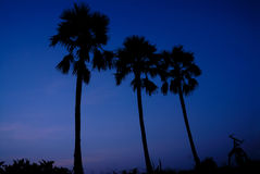 Silhouette of sugar palm tree Royalty Free Stock Images