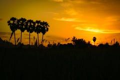 Silhouette sugar palm tree Royalty Free Stock Photo