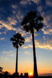 Silhouette of sugar palm tree on sunset sky. Background stock photos