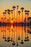 Silhouette Sugar Palm Tree sur le gisement de riz photo libre de droits