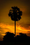 Silhouette sugar palm tree Stock Photography