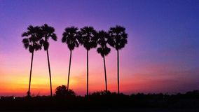 Silhouette of sugar palm trees Stock Photography