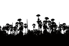 Silhouette sugar palm Royalty Free Stock Photography