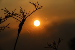 Silhouette of  the sun with spider web on the brance of tree  in. The evening Stock Image