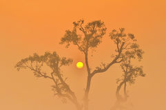 Silhouette-Sunrise behind trees Royalty Free Stock Images