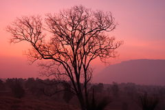 Silhouette sunrise. The sunrise at Phu Reau Loei Thailand making the tree as silhouette. With the pink and red of morning sky, it make the scene is so beautiful Stock Photo