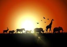 Silhouette sunset animals on savannas. Illustration of silhouette sunset animals on savannas royalty free illustration