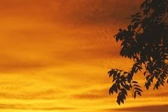 Silhouette sunset royalty free stock images