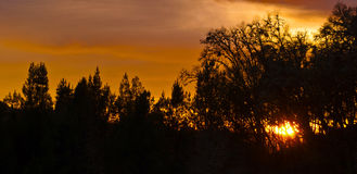 Silhouette Sunset. Silhouette of some trees during sunset on the countryside of Oregon Stock Photography