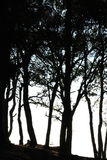 Silhouette sunset of tree on Phu Rua Royalty Free Stock Images