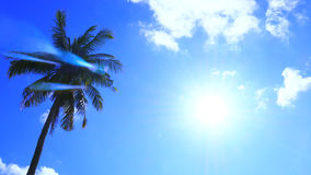 Silhouette Sunshine and coconut tree in sky blue have cloud Royalty Free Stock Image