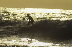 Silhouette Surfer Royalty Free Stock Photo