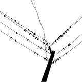 Silhouette swallow Royalty Free Stock Images