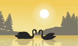 Silhouette of swan beauty landscape on lake Stock Images