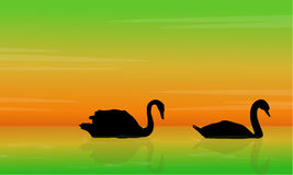 Silhouette of swan beauty landscape Royalty Free Stock Photos