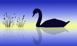Silhouette of swan beauty nature scenery Stock Images