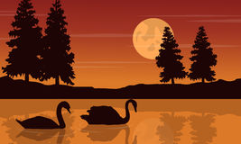 Silhouette of swan beauty scenery Royalty Free Stock Image