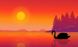 Silhouette of swan on lake nature scenery Royalty Free Stock Photos