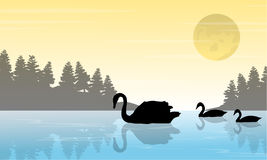 Silhouette of swan on lake scenery Royalty Free Stock Photo