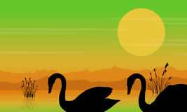 Silhouette of swan at sunrise beauty scenery Royalty Free Stock Image