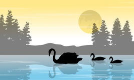 Silhouette of swan and tree on lake scenery Stock Images