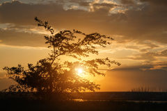 Silhouette of thin little tree on beauty sunset Royalty Free Stock Photography