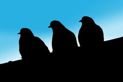 Silhouette of three doves Stock Images