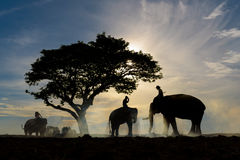 Silhouette of three men ride elephant. Silhouette of three men ride each their elephant under big tree with beautiful blue and orange sky during sunrise stock photo