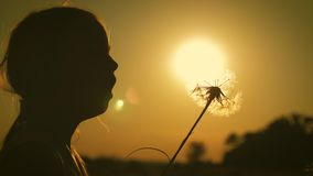 Silhouette to the pretty child girl blowing on the ripened dandelion in the evening against the background of the sunset. Sun stock footage