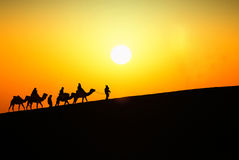 Silhouette of tourists on camels Royalty Free Stock Photo