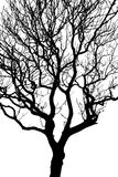 Silhouette of a Tree. A tree silhouetted against a plain white background Stock Image
