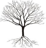 Silhouette of tree. Silhouette of a tree with roots, isolated on white Royalty Free Stock Image