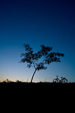 Silhouette tree Stock Photography