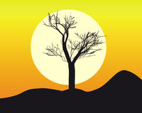 Silhouette of a  tree. In the sun and the orange sky Stock Photography