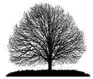 Silhouette of a tree. Isolated on white Royalty Free Stock Photos