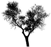 Silhouette of a tree Royalty Free Stock Images