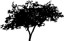 Silhouette a tree Stock Photography