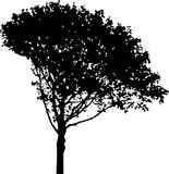 Silhouette a tree Stock Image