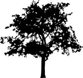 Silhouette a tree Royalty Free Stock Images