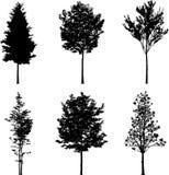 Silhouette a tree Royalty Free Stock Photos