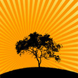 Silhouette of tree  Royalty Free Stock Photography