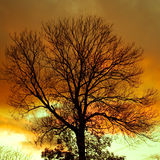 SILHOUETTE TREE Royalty Free Stock Image